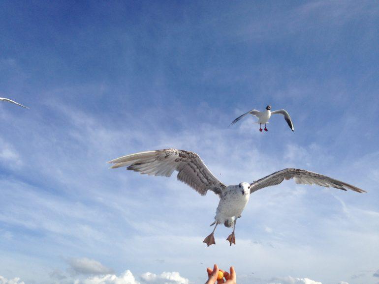 Baltikum: Möwen in der Luft