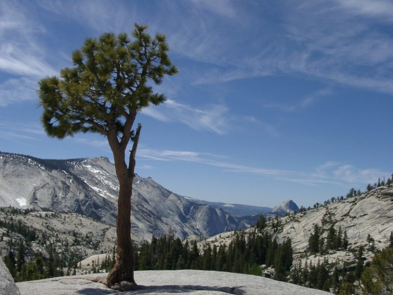 Best road trips: Treen and mountains in Yosemite National Park
