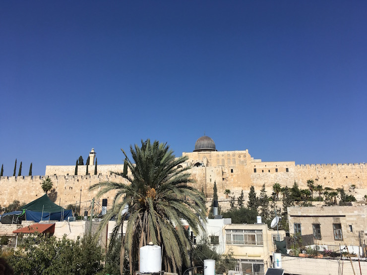 Palmen und Gemäuer in der Davidstadt Jerusalem