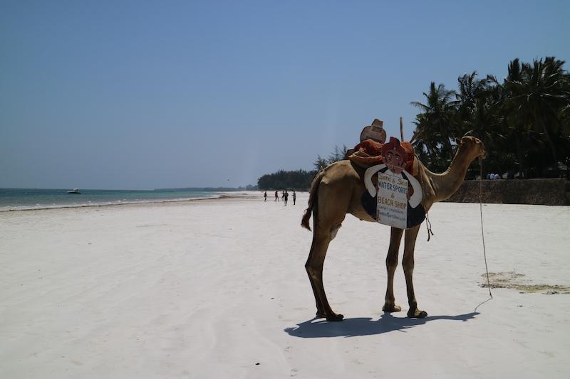 Galu Kinondo Beach