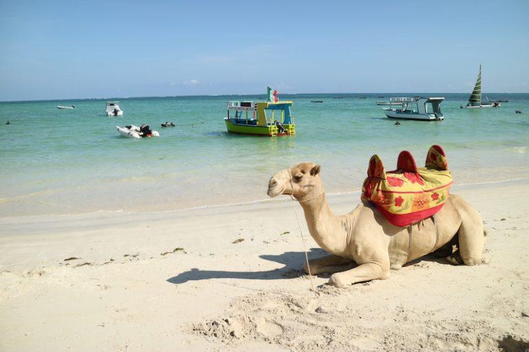 Kenia Strand: Kamel und Boote am Kenyatta Beach