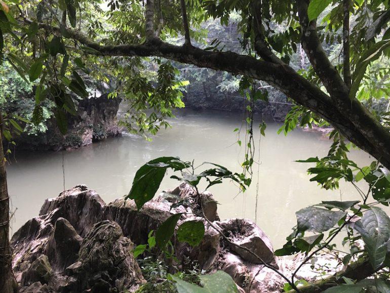 Kolumbien Reisetipps: Fluss und Pflanzen am Rio Claro