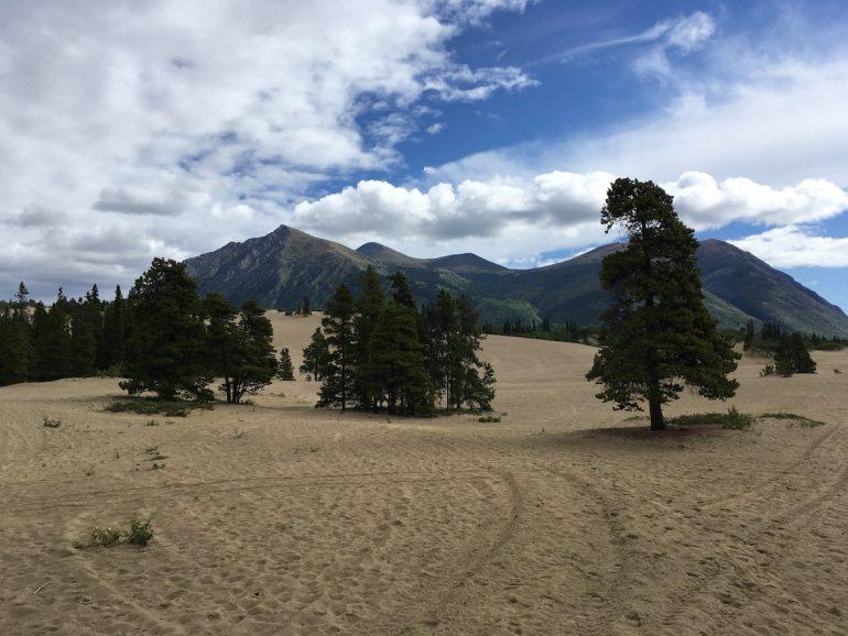 Yukon: Sand und Bäume in der Carcross Desert