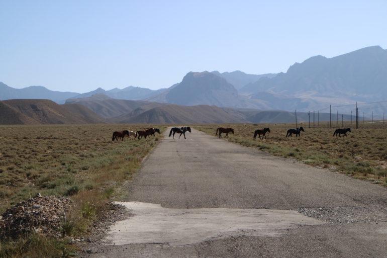 Innere Mongolei: Wildpferde überqueren eine einsame Straße in den Bergen