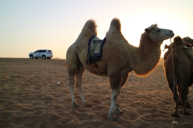 FB Life Festival Kamel