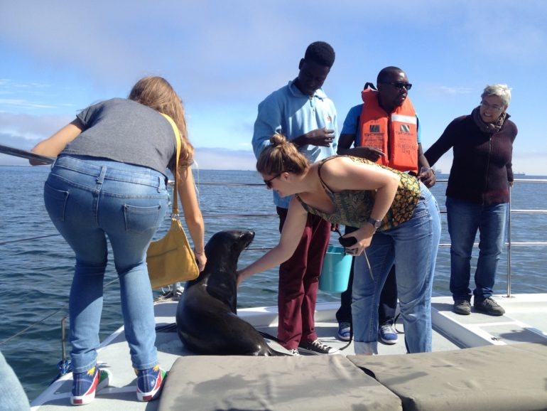 Adventures in Namibia: Sea lion on board of a tourist boat in Walvis Bay