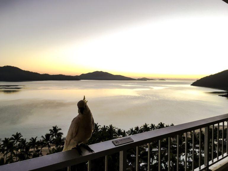 Whitsundays: Tukan auf Veranda mit Blick auf den Sonnenaufgang