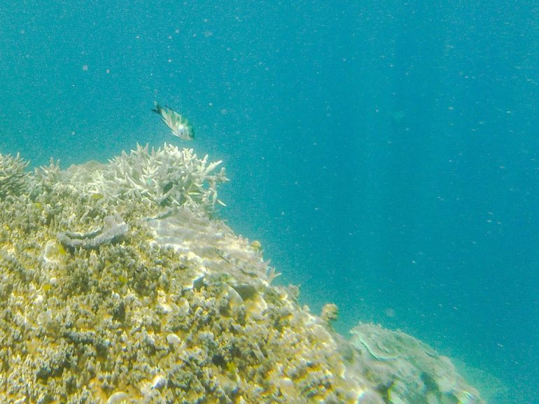 Whitsundays: Fisch am Great Barrier Reef