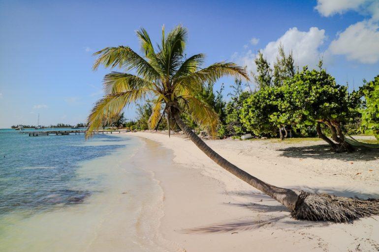 Britische Jungferninseln: Palme am Strand in Anegada