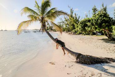 Britische Jungferninseln: Marco Buch auf einer Palme in Anegada