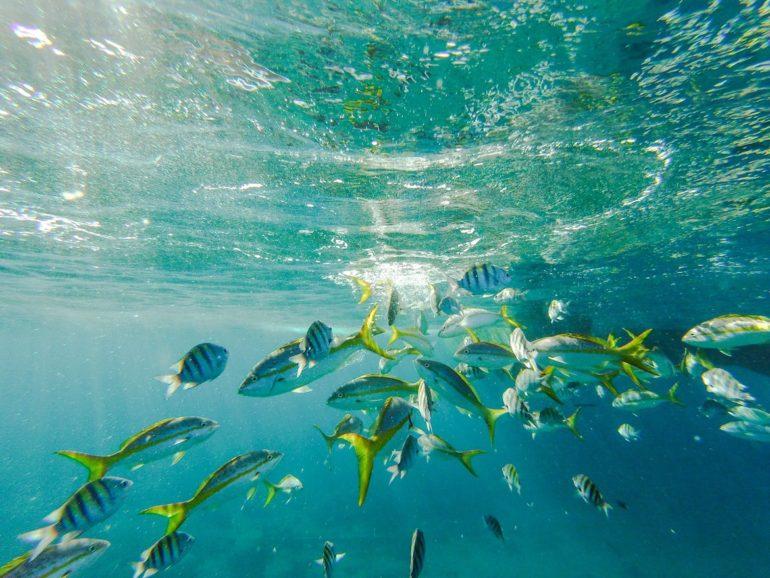 Unterwasseraufnahme von bunten Fischen vor Cooper Island