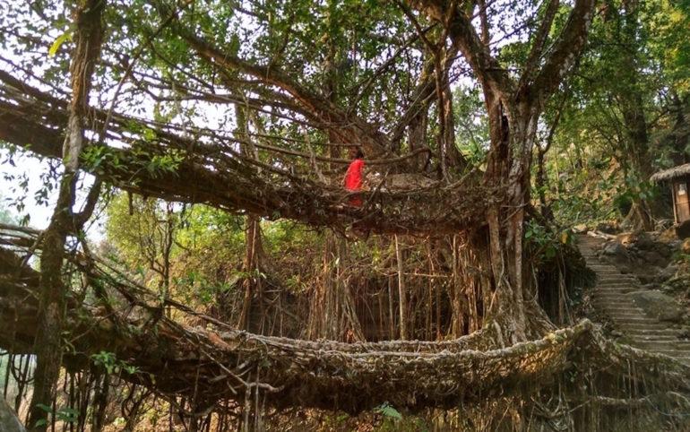 Unbekannte Reiseziele: Frau im Dschungel in Nordostindien