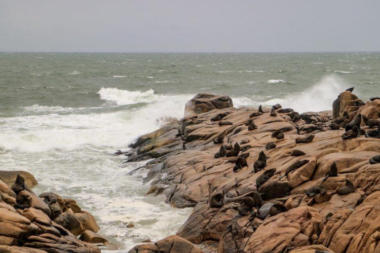 Uruguay Sehenswürdigkeiten: Seelöwen auf Felsen in Cabo Polonio