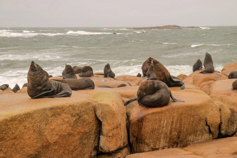 Uruguay Sehenswürdigkeiten: Seelöwen auf einem Felsen in Cabo Polonio