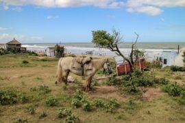 Uruguay Sehenswürdigkeiten: Pferd vor dem Meer in Punta del Diablo
