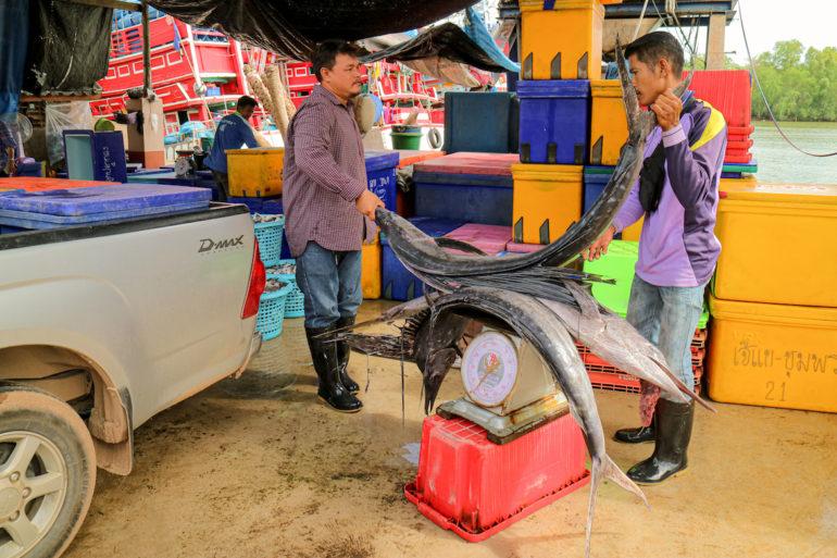 Zwei Fischer wiegen große Fische auf einer Waage
