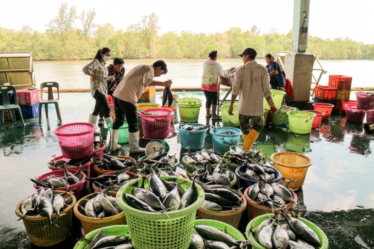 Menschen sortieren Fische am Hafen in Pak Nam