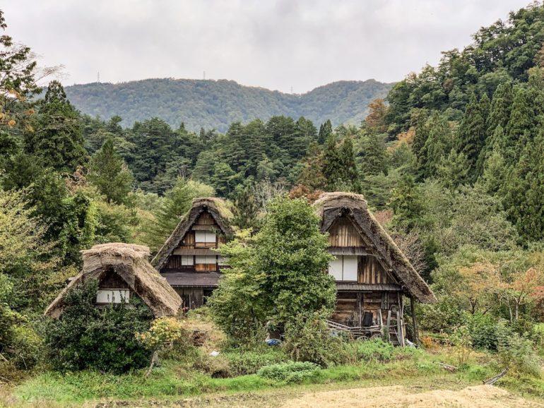 Strohgedeckte Häuser vor Bäumen in Shirakawa-go