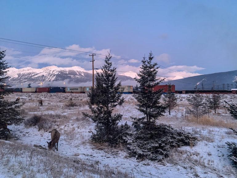 Alberta Highlights: Elche vor Zug und Bergkulisse.