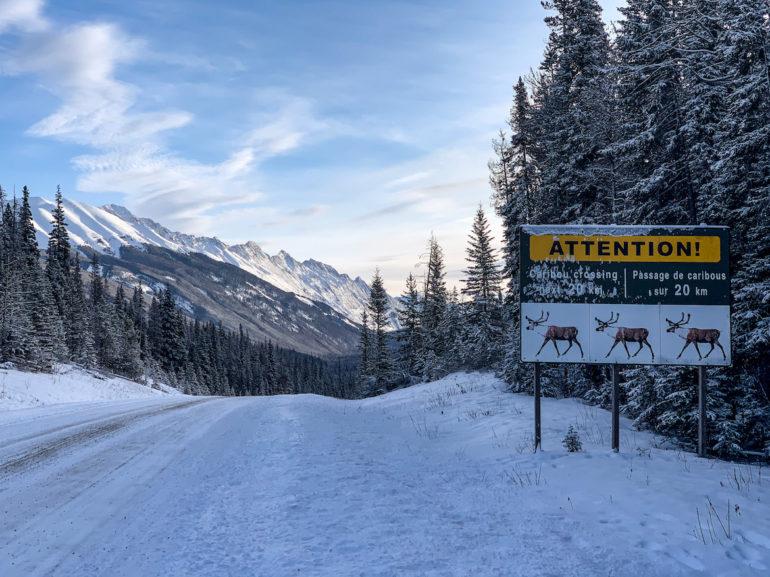 Alberta Highlights: Schild vor verschneiter Strasse und Bäumen.