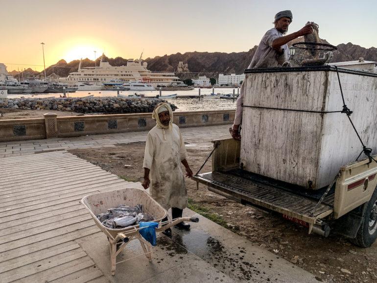 Männer beim entladen von Fisch im Sonnenaufgang von Maskat
