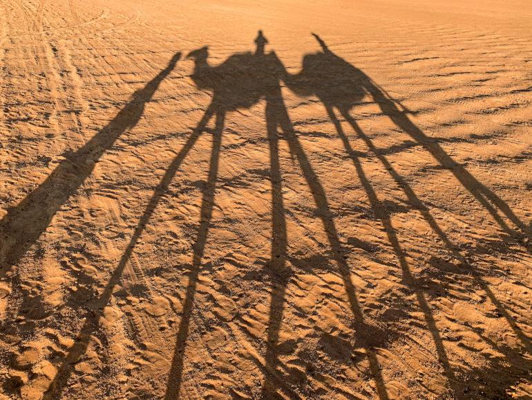 Schatten von Kamelen in der Wüste