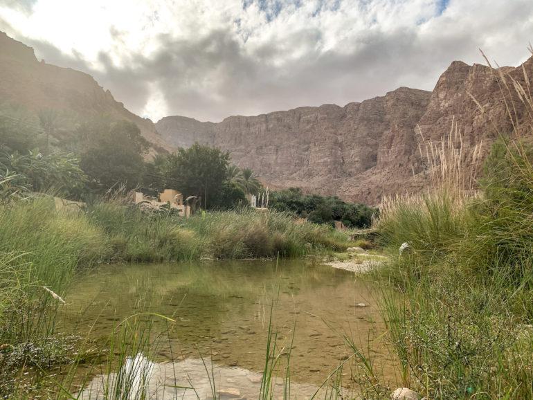 Wasser, Pflanzen und Felsen in Wadi Tiwi