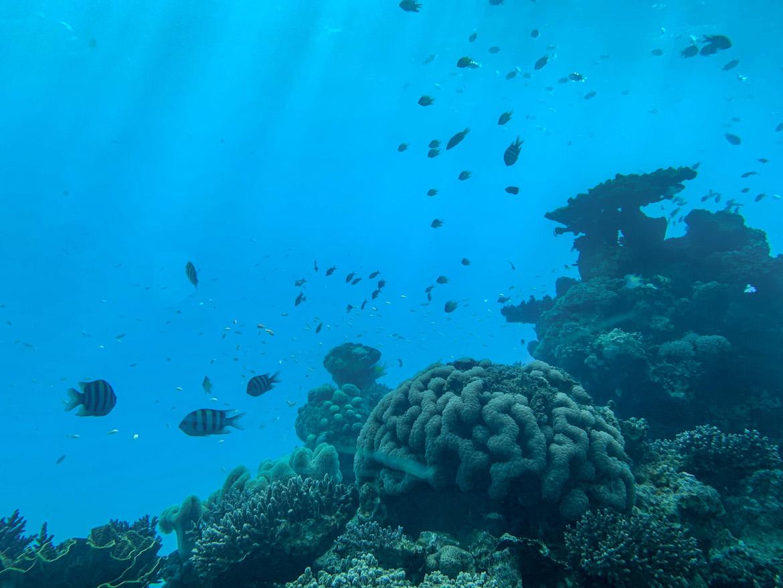 Fische und Korallen im Underwater Observatory